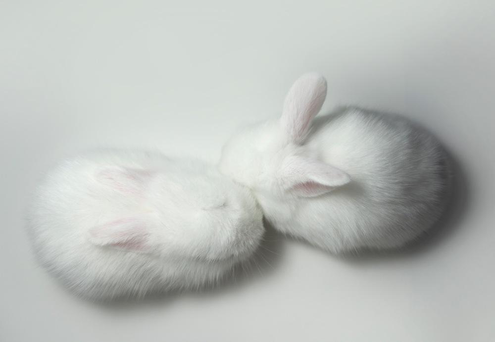 dwa słodkie króliczki wesowow.jpg